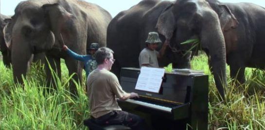 Vorsicht Täuschung: Elefanten und der Pianist Paul Barton