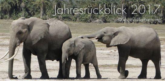 Future for Elephants – 2017 – the year in review